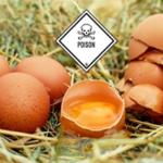 Fipronil – gepanschte Reinigungsmittel führen zu einer Kontaminierung von Millionen Eiern