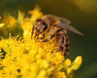 Bienen und Honig in diesem Sommer