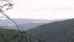 steh' Wald Inspiration frischer Wind