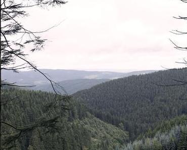 Ich steh' im Wald – Inspiration und frischer Wind
