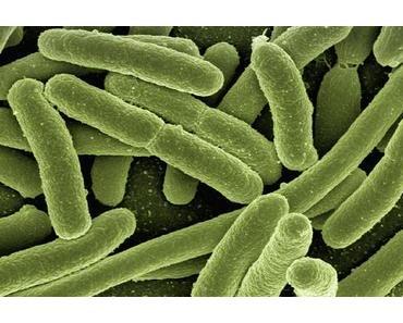 Die Mikrobiom – Revolution