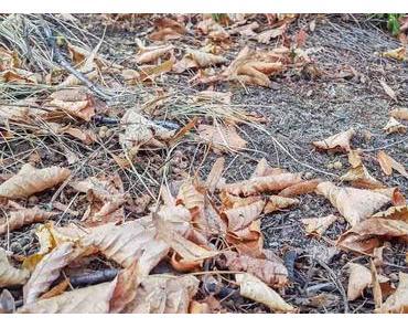 Tag des Herbstspaziergangs – der amerikanische Autumn Stroll Day
