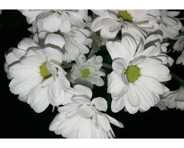 Foto: Weiße Chrysanthemen