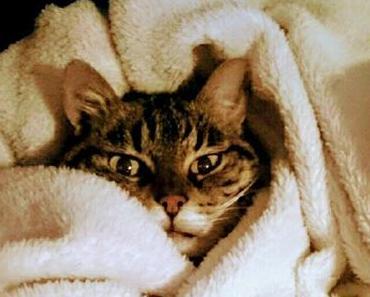 Ein Katzenleben