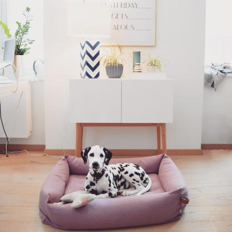 Dalmatiner Amy Design Hundeausstattung Cloud7