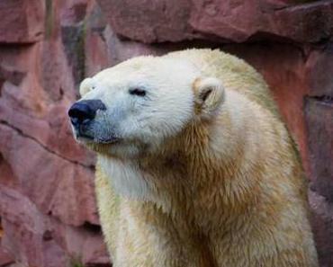 Tiergarten Nürnberg - Tieren das Wort in den Mund gelegt
