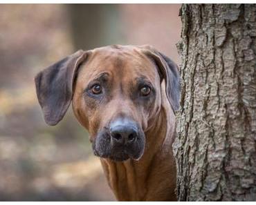 Dayos Gedanken – Spenden-Marathon für Tiere