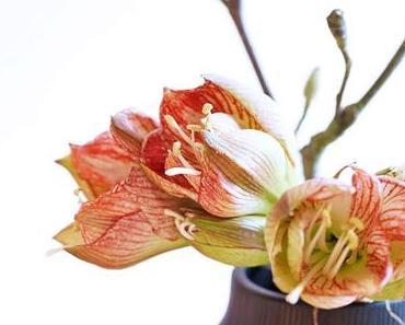 Friday-Flowerday 50/17