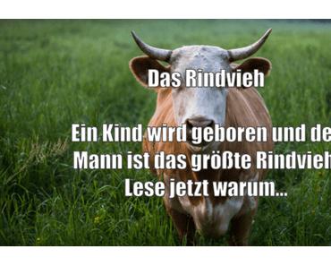 Story: Das Rindvieh