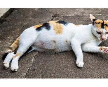 Trächtigkeit bei Katzen – Alle Infos zu Schwangerschaft und Geburt