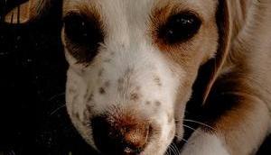 Einem Hund Tierheim Zuhause geben