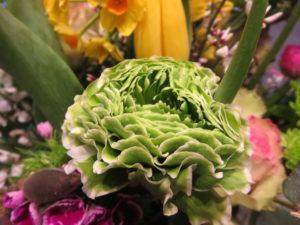 Was bedeuten Ranunkeln in der Blumensprache?