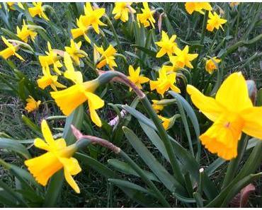 Foto: Zeit für den Frühling