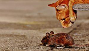 Katz- und Mausspiel