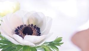 Friday-Flowerday 12/18