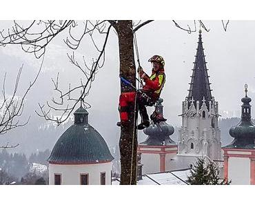 Bild der Woche: Baumschnitt Greifensteiner