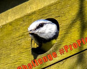 Challenge & Linkparty #ProPiep: Mein vogelfreundlicher Garten