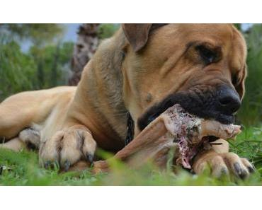 Hundekacke in Andratx nicht gern gesehen
