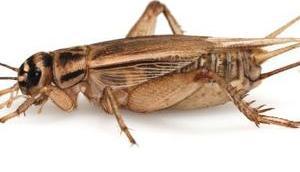 Carrefour bringt Insektennahrung Markt