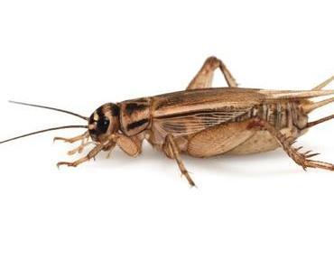Carrefour bringt Insektennahrung auf den Markt