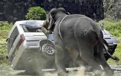 Elefant wirft kleinbus um