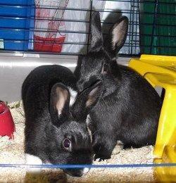 Die Kaninchenrettung e.V. braucht Unterstützung – Wer macht mit?