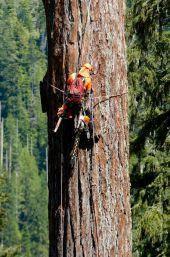 Waldstrategien der Bundesregierung nicht mehr zeitgemäß