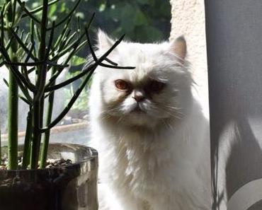Die weiße Zauberfee Mademoiselle Luna