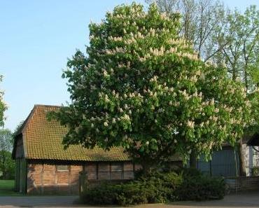 Susanne Gundermann: Bäume wahrnehmen lernen, Vortrag und Seminar in Hannover, Juni 2018