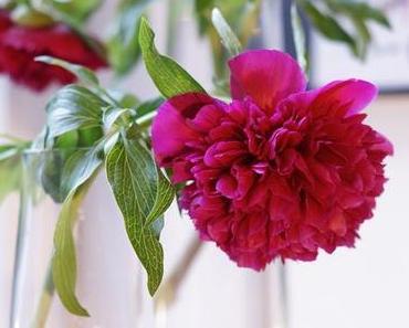 Friday-Flowerday 20/18