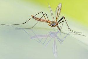 Insektenstich richtig behandeln