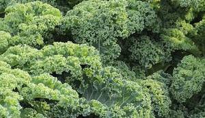 Grünkohlchips selber machen