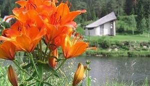 Feuerlilie Blüten Fotoserie