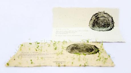 Grüner Geht S Nicht Graspapier Samenpapier Und Postgärten
