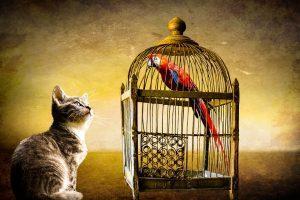 Der Papagei und die Katze