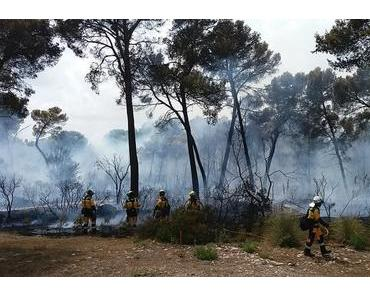 Feuer an der Costa de los Pinos unter Kontrolle