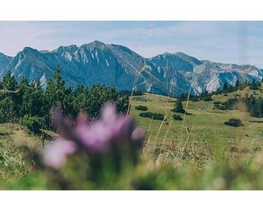 Zeller Staritzen – Zinken (1619 m) – Herrlicher Ausblick