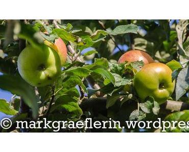 Apfelernte … und 215 Liter Bio-Apfelsaft