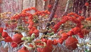 Kürbiszeit oder Floristik Kürbis-Ciabatta