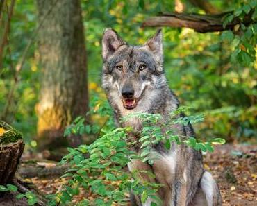 Mein unvergesslicher Besuch im Wolfcenter Dörverden