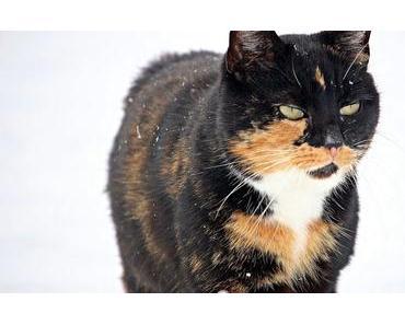 Katzen im Winter – 6 Fragen für dich beantwortet