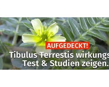 AUFGEDECKT! ▷ Tribulus Terrestis wirkungslos? Test & Studien zeigen..