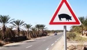 Tunesien: Sandmeer, Dattelwald Salzsee