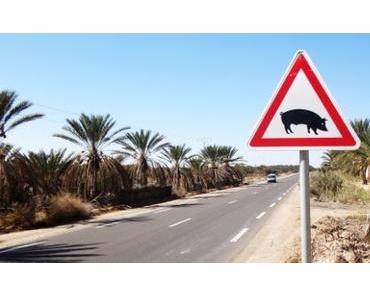 Tunesien: Sandmeer, Dattelwald und Salzsee