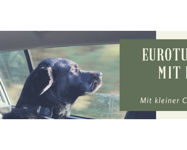 Eurotunnel mit Hund – Calais nach Folkestone England