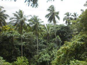 Küste Brasiliens Mata Atlântica