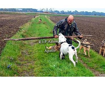 Zwei Freunde die unvergessen sind  R.I.P Adam & Apollo !!