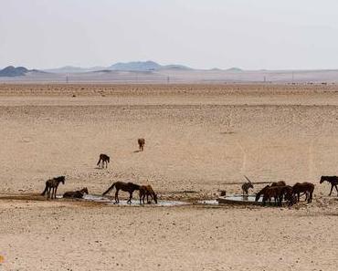 Die Wüstenpferde von Namibia – ein Wunder der Natur