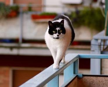 Den Balkon katzensicher machen – Die Katzenoase im Freien