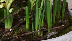 Frühling zieht ein: Frühlingsblüher ganz viel Natur euren Tisch
